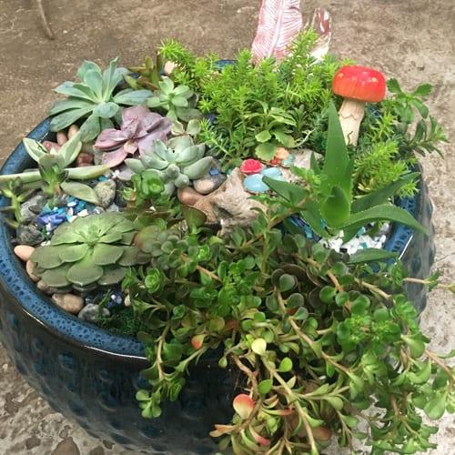 florist in gadsden
